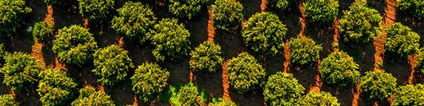 Agroalimentació